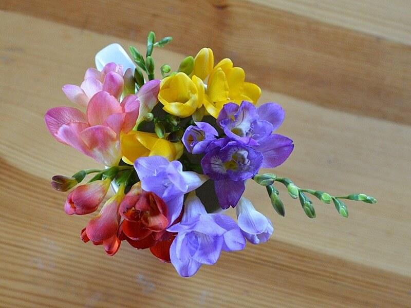 Frézia virágok különböző színben