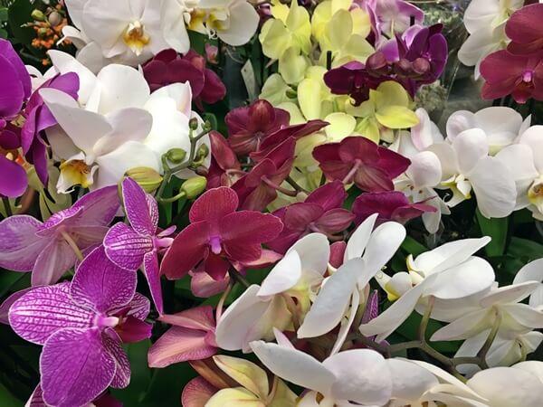 Lepkeorchidea -pillekosbor többféle színben