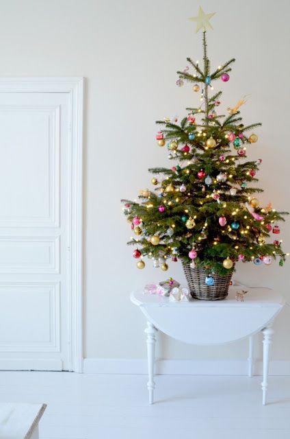 cserepes karácsonyfa, élő fenyőfa